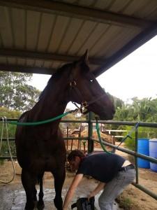 woofing-australie-cheval