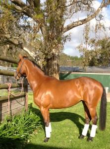 woofing-equitation-australie