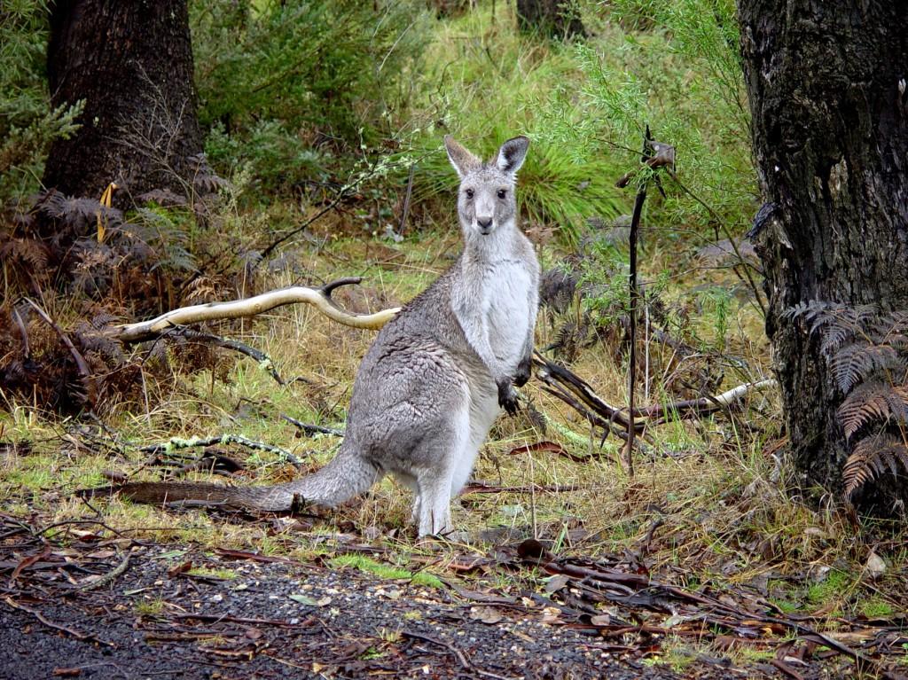 woofing-australie