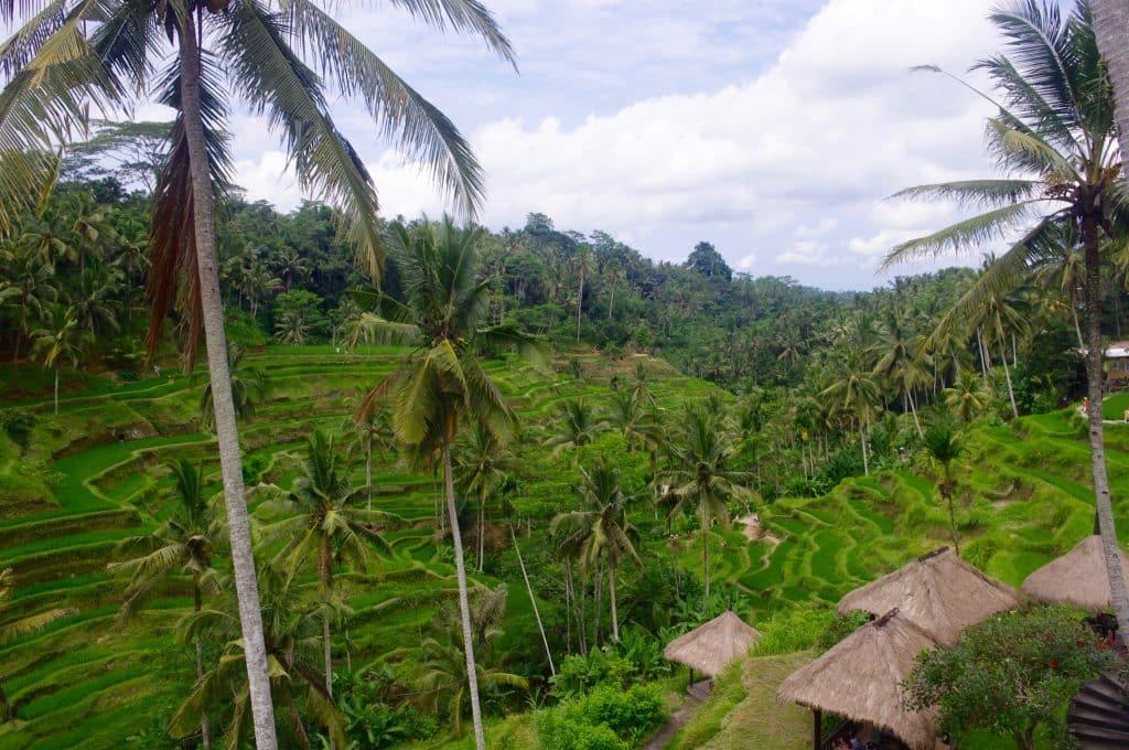rizière bali tengalalang