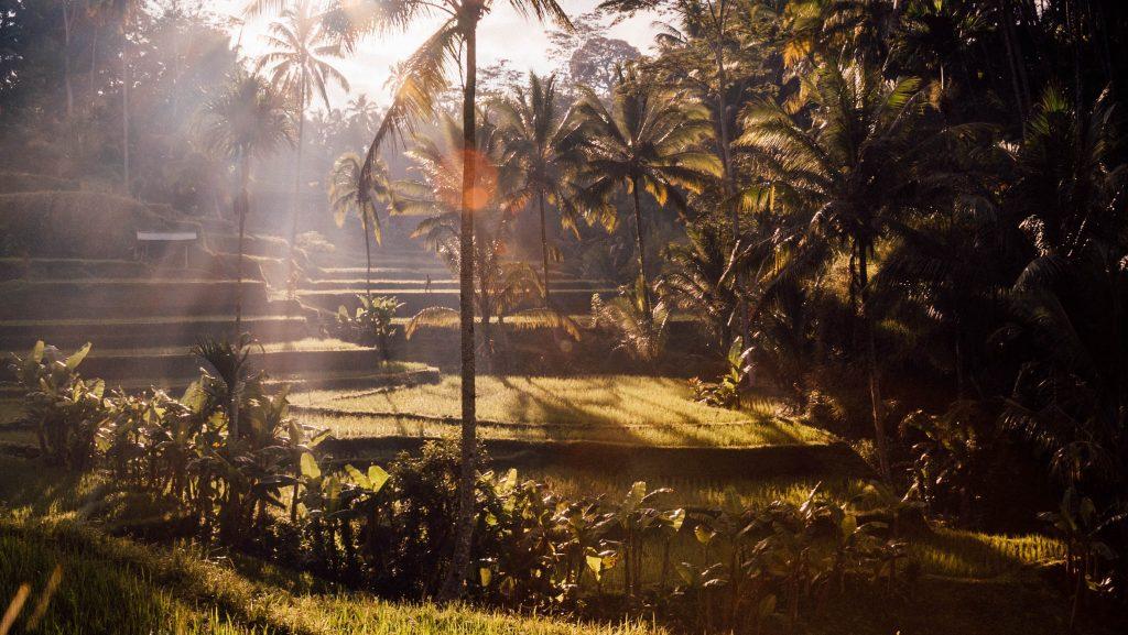ubud à Bali, en indonésie
