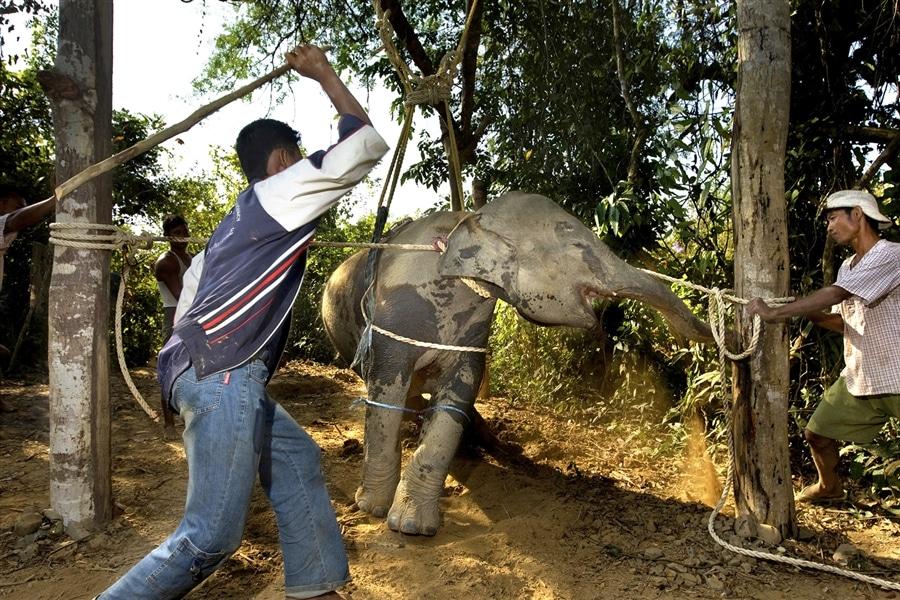 briser l'éléphant