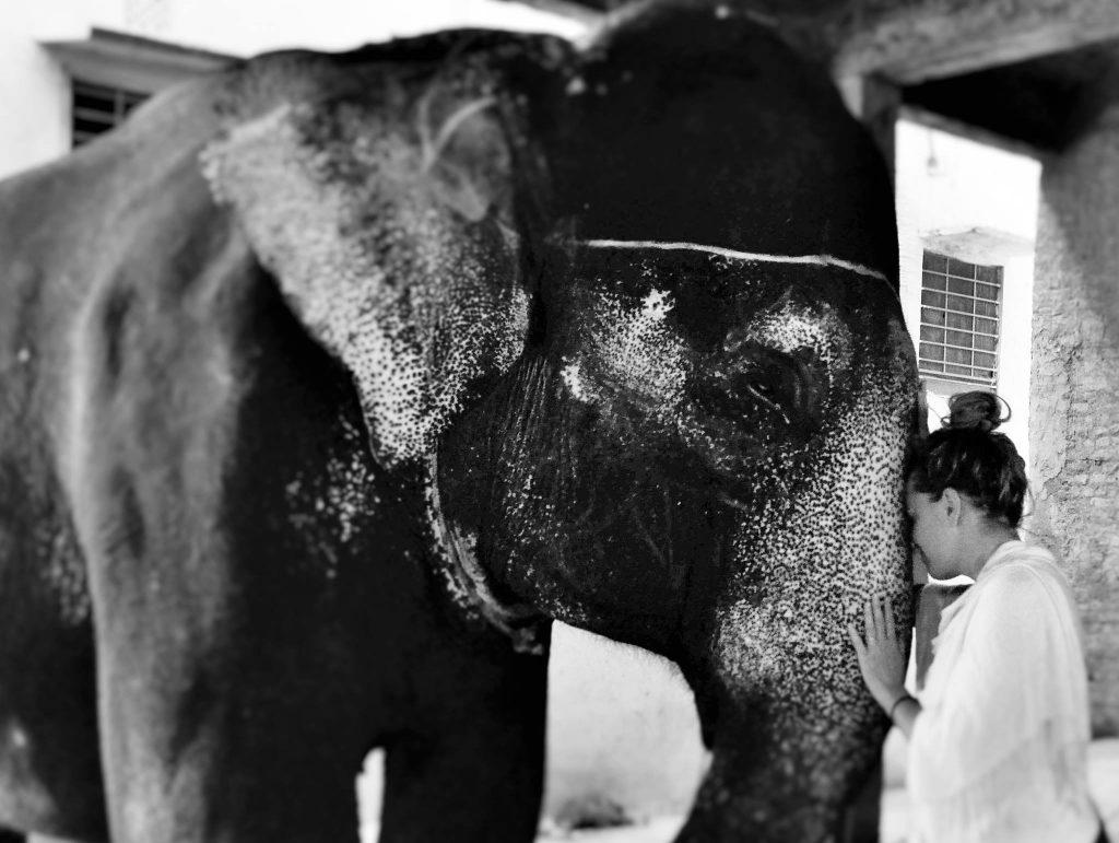 rencontre avec l'éléphant